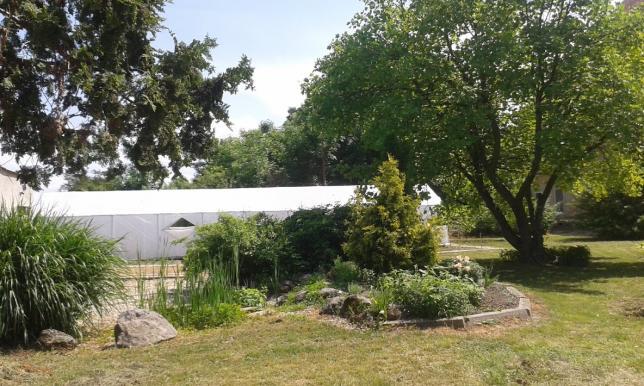 fóliovník v školskej záhrade