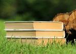 Nové novely zákonov v oblasti školstva pomôžu odborným učiteľom